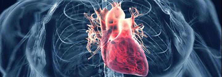 โรคหัวใจ (โรคหลอดเลือดหัวใจ)----feat